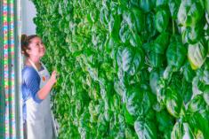 Những nông trại trong nhà hút vốn đầu tư triệu đô ở Mỹ