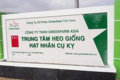 GREENFARM ASIA GGP SWINE FARM - PHASE 1